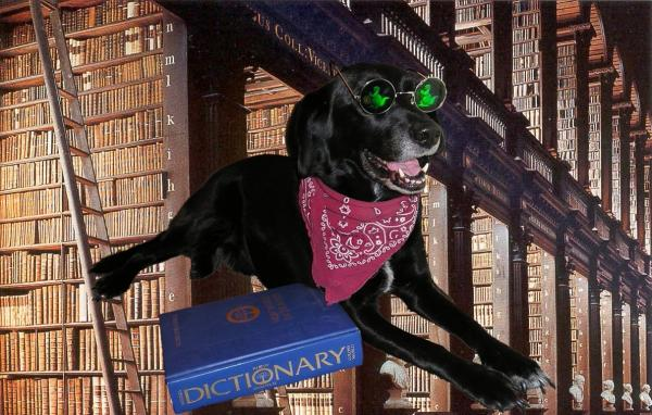 dog and library